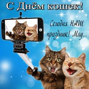 Развиващие задания. С Всемирным днём кошек Открытка с международным днем кошек. Красивая с Днем кошек.  Прикольные открытки с Днем кошек. Анимационные открытки с Днем кошек. Поздравительные открытки С днём кошек. Открытки С днём кошек. Открытки С днём кошек бесплатно.