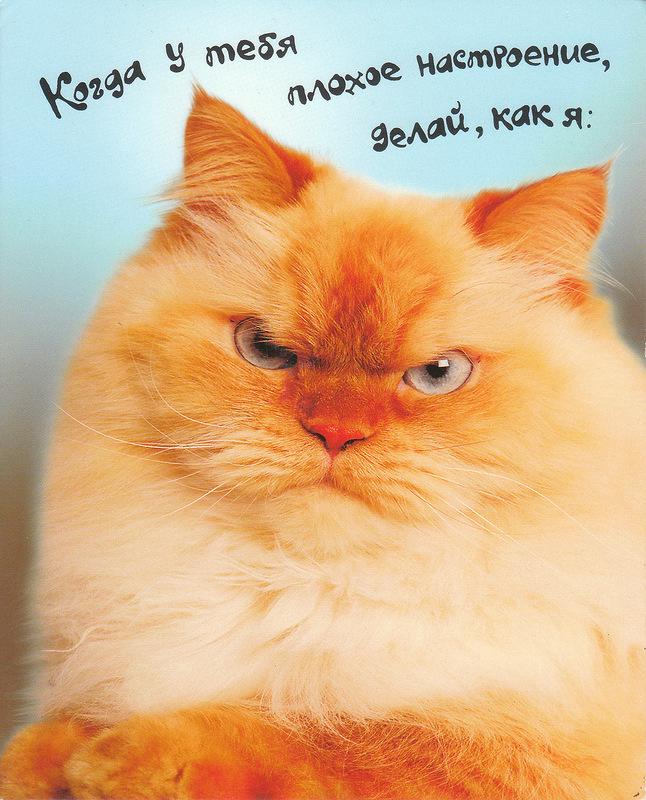 Развиващие задания. С кошками Открытки с кошками Доброе утро. Открытки с кошками Спокойной ночи открытки с кошками своими руками. Открытка с днем рождения с кошками. Открытка с 8 марта с кошками. Открытка с кошкой. Открытка кошка цветами. Открытки с кошками прикольные. Открытки с кошками скачать бесплатно.