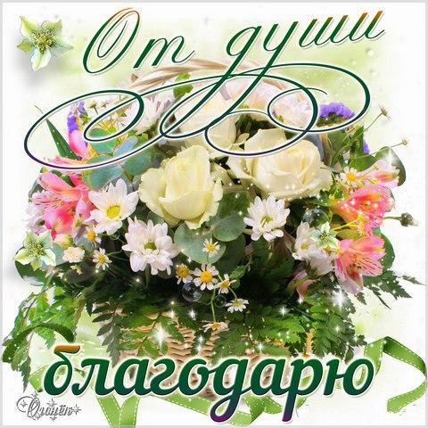 Спасибо: картинки и красивые изображения с благодарностью- oformikrasivo.ru