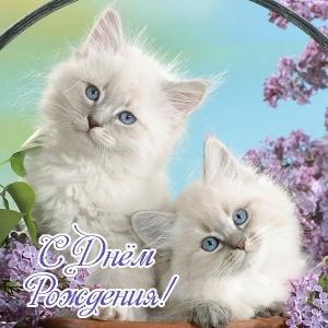 Развиващие задания. Смешные картинки котов с надписью. Смешные фото котов с приколами. Приколы с котами. Картинки кошек с надписью скучаю. Смешные фото кошек с текстом. Приколы про котов с надписью. Фото котов юмор. Смешные фото котов с приколами.