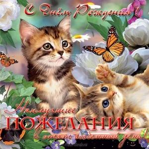 Развиващие задания. Картинки с кошками смешные. Картинки с кошками с надписью. Картинки с кошками Привет. Картинки с кошками Я тебя люблю открытки с кошками прикольные. Открытки с кошками с Днём Рождения. Открытки с котами прикольные. Открытки с котами скачать бесплатно анимационные открытки С днем рождения с котами.