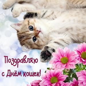 Развиващие задания. С Всемирным днём кошек Открытки с Днем кошек и первым днем весны. Открытки с Днем кошек скачать бесплатно.  Открытки С днём кошек 1 марта. Прикольные открытки с Днем кошек красивые открытки с Днем кошек. Анимационные открытки с Днем кошек. Поздравительные открытки с Днем кошек.