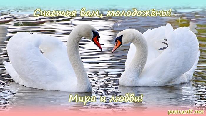 Развиващие задания. Открытки с Днём свадьбы лебеди. Открытка С Днём рождения С лебедями. Красивая картинка с лебедями. Картинка с белыми лебедями. Картинки с лебедями скачать бесплатно. Картинки лебеди на пруду. Картинки с лебедями скачать. Красивые картинки с лебедями.