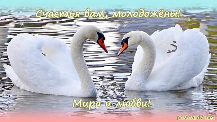 Развиващие задания. С лебедями Открытки с Днём свадьбы лебеди. Открытка С Днём рождения С лебедями. Красивая картинка с лебедями. Картинка с белыми лебедями. Картинки с лебедями скачать бесплатно. Картинки лебеди на пруду. Картинки с лебедями скачать. Красивые картинки с лебедями.