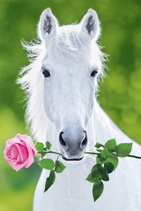 Открытки Картинка с лошадьми. Картинки с лошадьми и красивые. Картинки с лошадью. Картинки с лошадкой. Картинки с лошадьми скачать. Картинки с лошадьми с днём рождения. Картинки с лошадьми красивые скачать бесплатно. Картинки с лошадью. картинки с лошадьми смешные нет.
