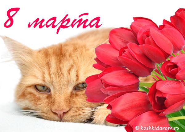 Открытки котята 8 марта