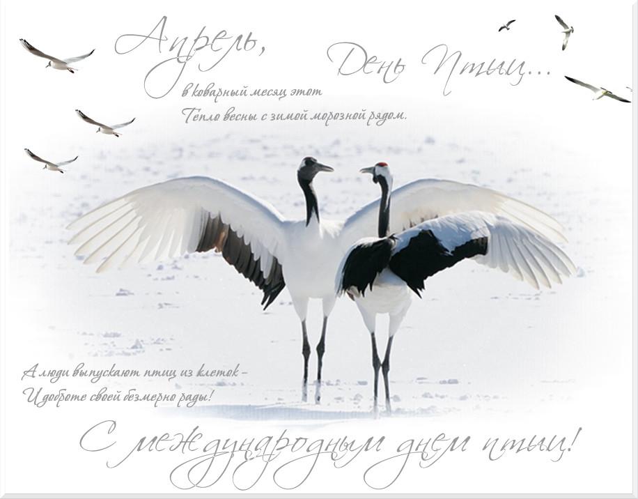 поздравление с международным днем птиц играла главную