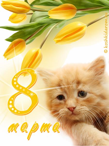 уважают с восьмым марта картинки с котятами станка для