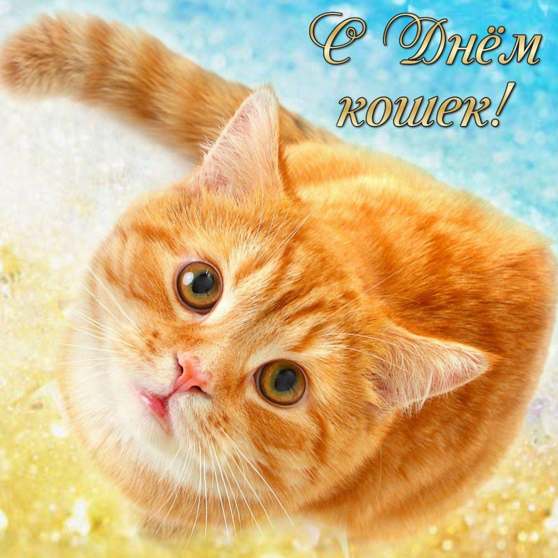 День кошек веселые картинки